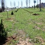 Dos zonas verdes de Valdeluz con escasa vegetación se repueblan con 615 árboles de distintas especies