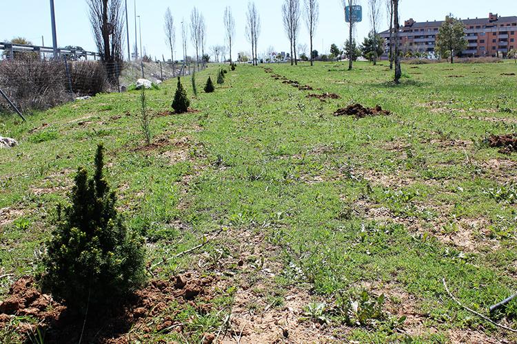 Nueva plantación de árboles en Valdeluz