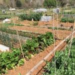 Hasta el día 30, se pueden solicitar 10 parcelas vacantes en los huertos ecosociales del Ayuntamiento