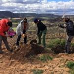Un olmo mil historias, el Grupo AEGITHALOS plantó tres ejemplares autóctonos en el camino del Olmillo, Brihuega