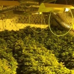 Tres detenidos por cultivar marihuana en Albalate de Zorita