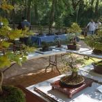 Este fin de semana, el Zoo de Guadalajara albergará una vistosa exposición de bonsais