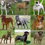 La Guardia Civil inicia una campaña de vigilancia de perros potencialmente peligrosos en la provincia