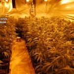 La Guardia Civil desmantela tres plantaciones de marihuana en Chiloeches y en Villanueva de la Torre