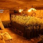 La Guardia Civil detiene a una persona por cultivar marihuana en Almadrones