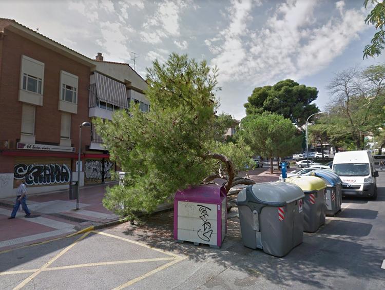 El árbol tumbado de la Concordia rodeado de contenedores de basura