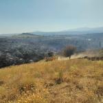 Declarado un incendio en Uceda que arrasa unas 20 hectáreas de monte