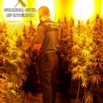 Desmanteladas dos plantaciones de marihuana, una en Cabanillas y otra en Torrejón del Rey
