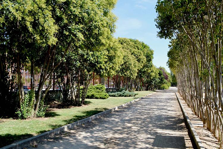 Paseo con sombra en el parque de La Quebradilla. Fotografía: Álvaro Díaz Villamil / Ayuntamiento de Azuqueca