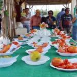 Concurso de tomates ecológicos en los Huertos Ecosociales de Azuqueca