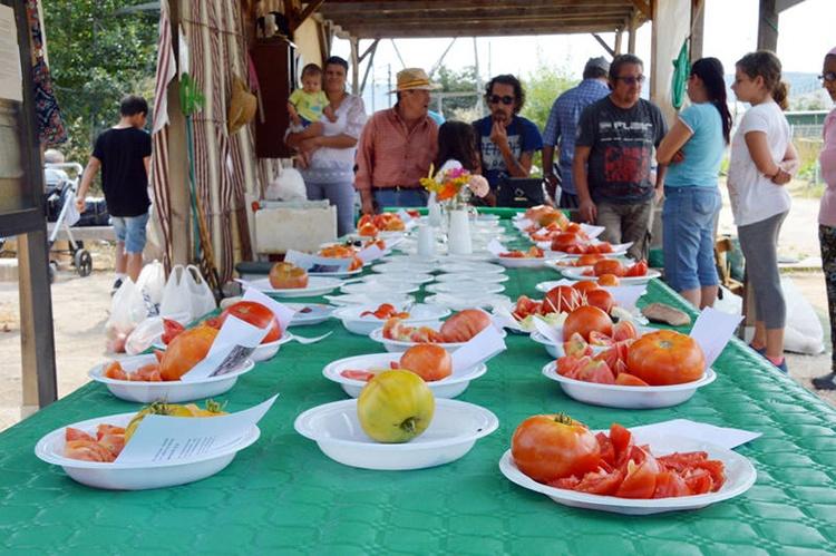 Variedades de tomates participantes en el concurso. Fotografía: Álvaro Díaz Villamil / Ayuntamiento de Azuqueca