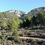 La gestión forestal como base para la prevención de incendios forestales