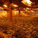 Desmantelas cinco plantaciones de marihuana en El Casar