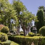 Brihuega: tierra de historia, música y lavanda