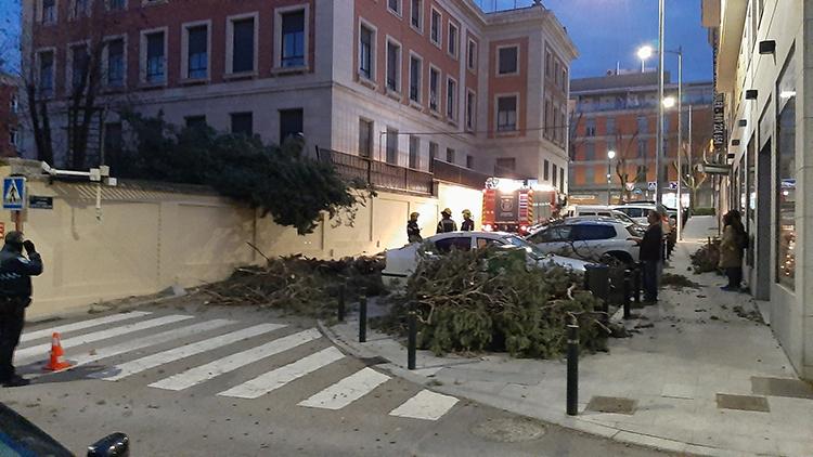 Un árbol de la Subdelegación del Gobierno, fue derribado por el viento
