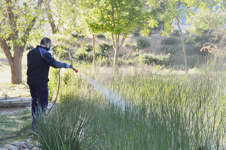 Imagen de archivo de la aplicación del tratamiento contra los mosquitos en la laguna de La Quebradilla