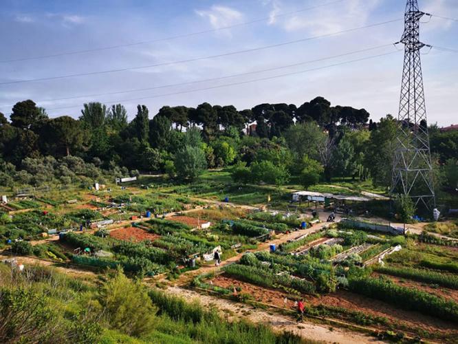 Imagen de los huertos urbanos del parque de La Quebradilla
