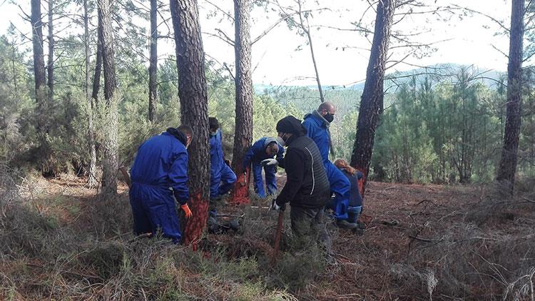Resineros trabajando. Foto Basilio Rodríguez