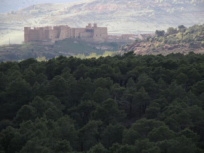 El Castillo de Sigüenza, desde el pinar. Foto de Diego Moreno