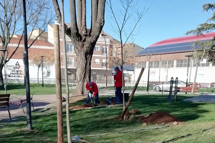 Un momento de la plantación realizada en el parque de la Ermita. Fotografía: Ayuntamiento de Azuqueca