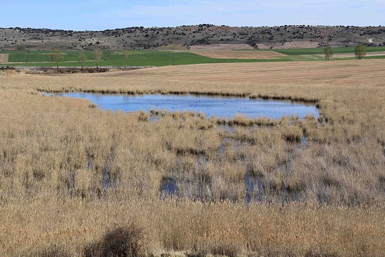 Laguna de Madrigal en Paredes de Sigüenza. Foto: Pedro Molina Holgado
