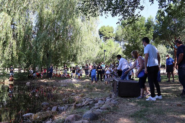 Un momento de la suelta de ánades reales en la laguna del parque de La Quebradilla. Fotografía: Ayuntamiento de Azuqueca