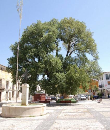 Plaza Mayor de Pareja. Ayuntamiento de Pareja